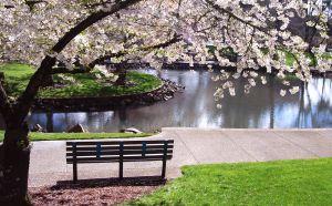 1019649_park_bench_under_magnolia_tree